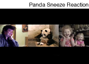 Panda Sneeze Reaction, 2009